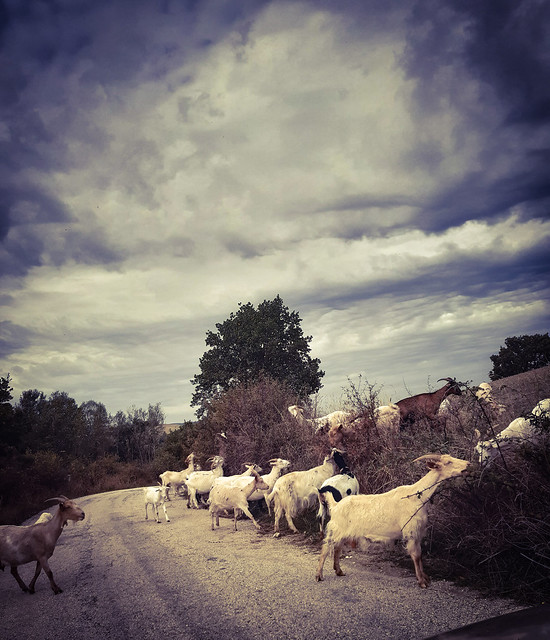 Traffic jam...on my way home