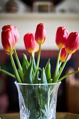 Tulips in Fall