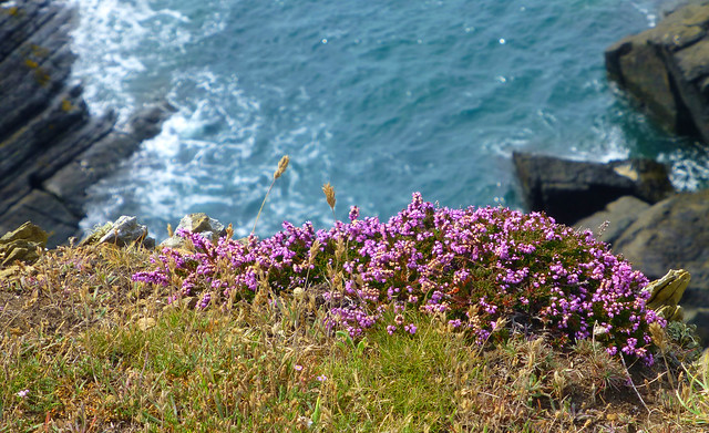 Pembrokeshire Coast NP, Wales