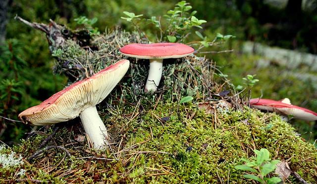 Colourful funghi