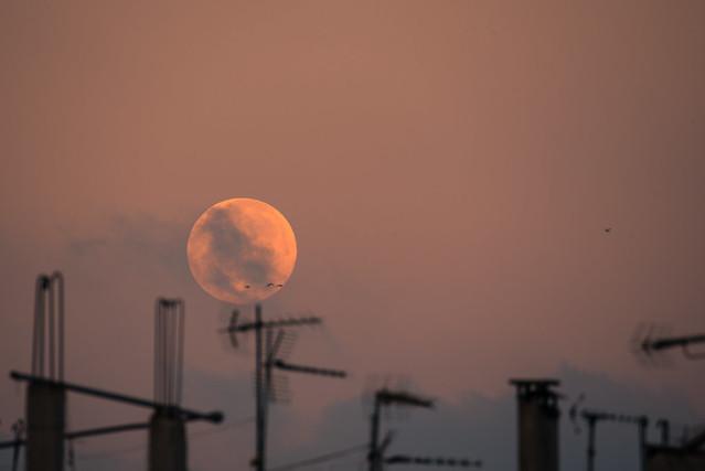 moonset through antennas