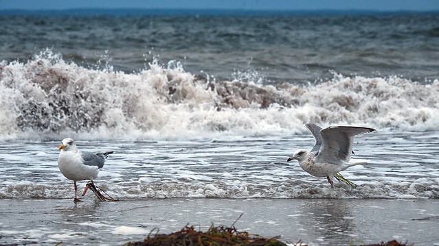 ... caught in the seaweed - Stormy weather