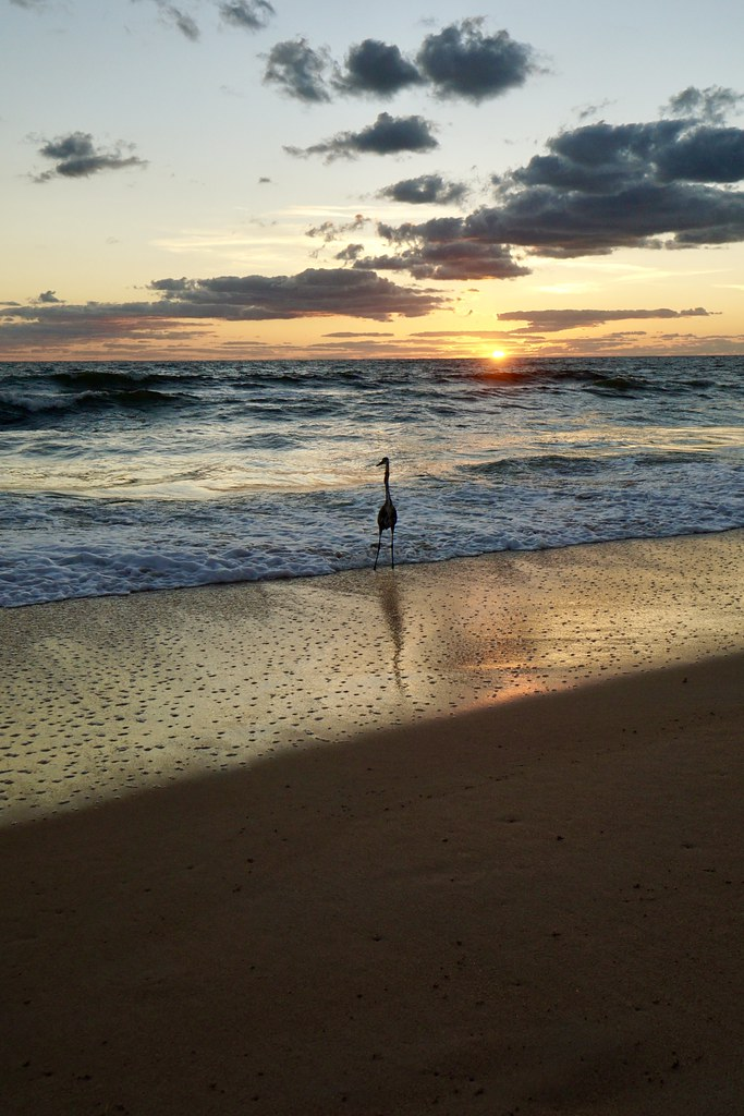 Sunrise on the Palm Coast