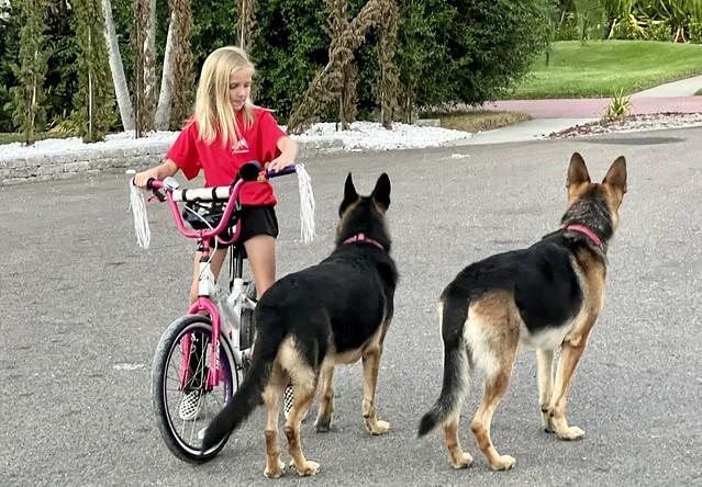 Kennedy & K2 Guarding Neighbors' Daughter & Watching For Traffic - IMRAN™