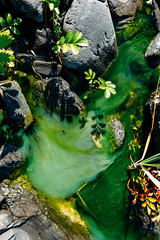 Abstractions of a Tide Pool I