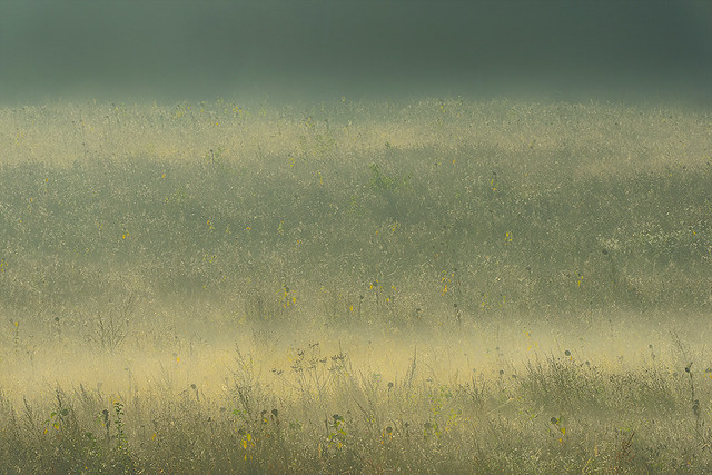 autumn is creeping alongside meadows ...