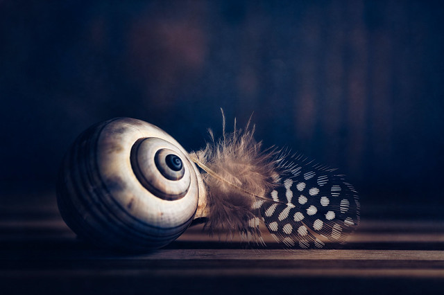 Shell and feather