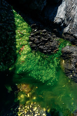 Abstractions of a Tide Pool II