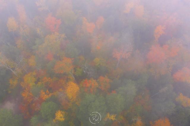 Veil of Mist