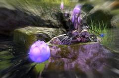 Respite by the Lotus Pond