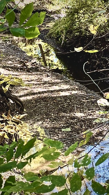 Dry Bottom Along Kill Creek