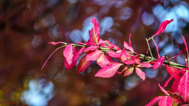 10284 - #Autumn