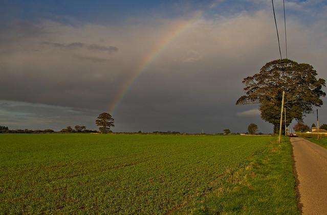 Rainbow 295/365