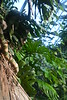 jungle bis