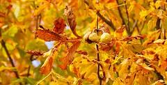Herbstzeit I