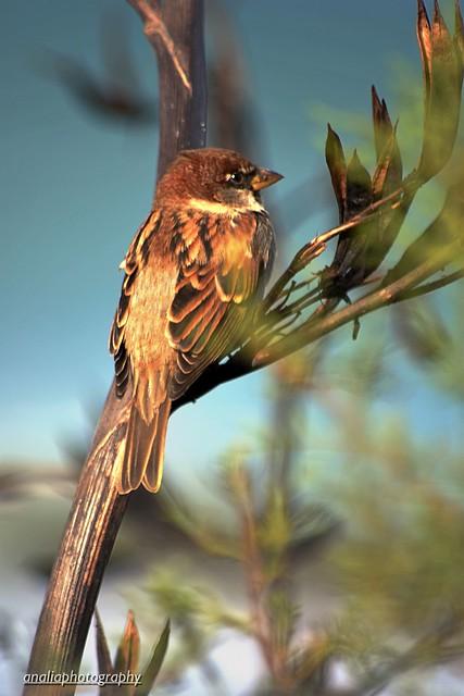 Necesito pájaros que canten