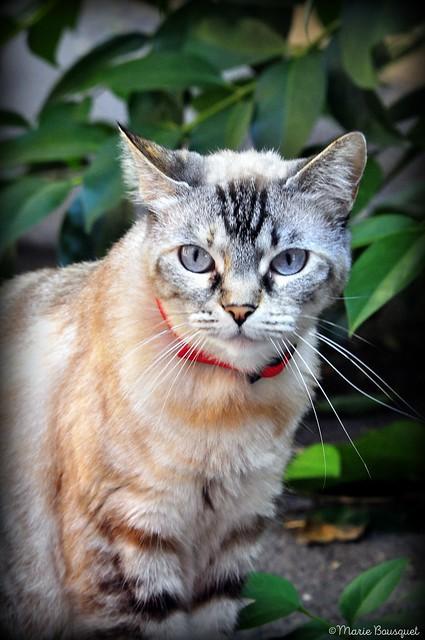 Petit chat au collier rouge