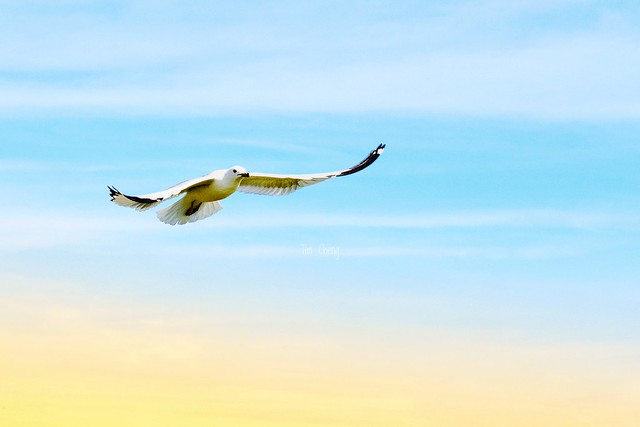 Sky | 振翅向天斜陽外