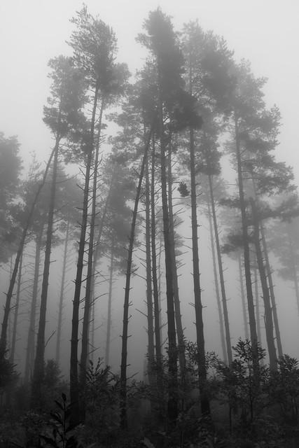 Boira al Bosc de Santa Fe (B&W)