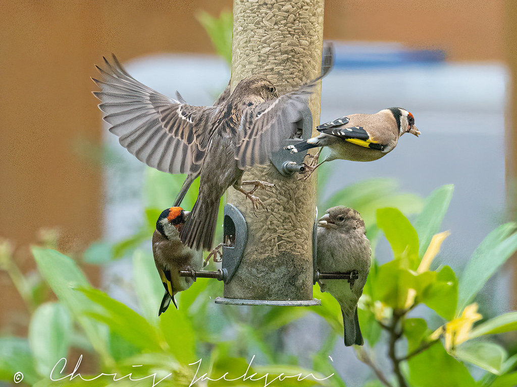 Incoming sparrow.