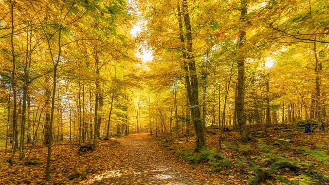 Golden Autumn ..