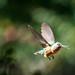 Randall Davey Audubon Center-14