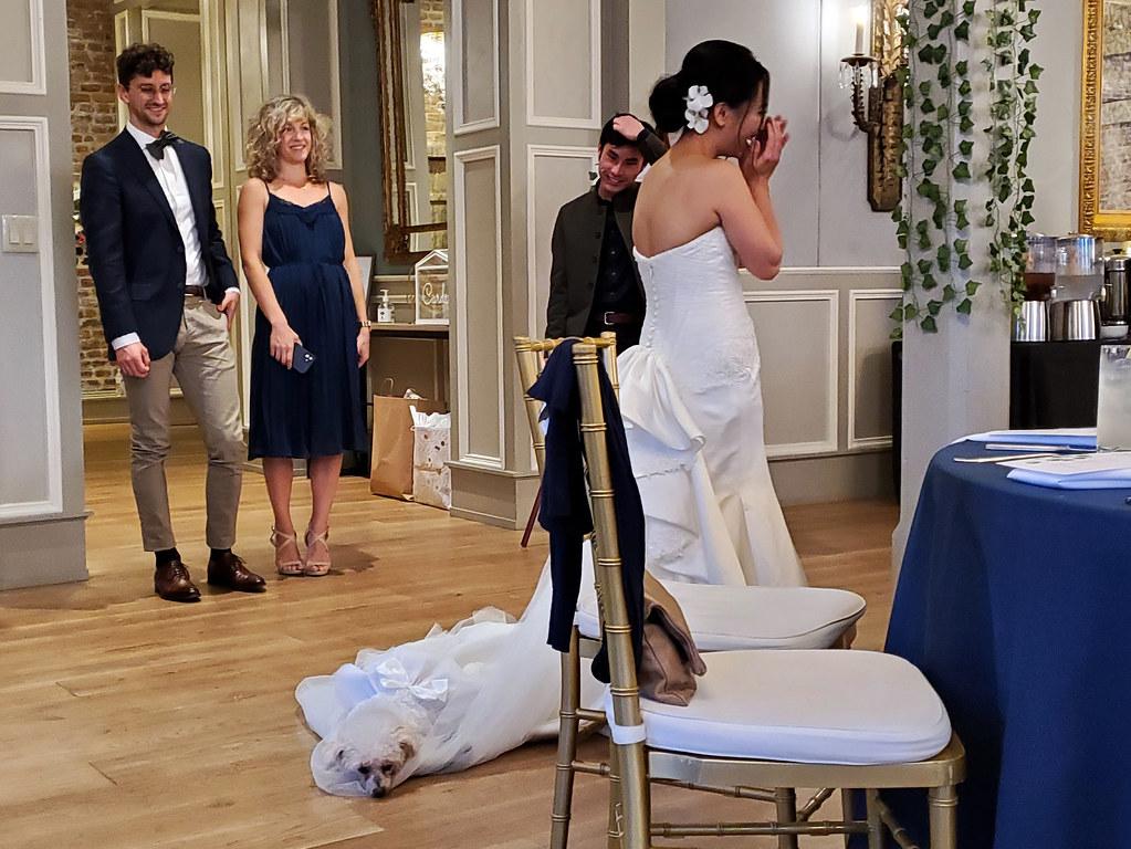 Mochi getting comfortable on Janice's wedding dress