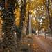 Early autumn 🍂