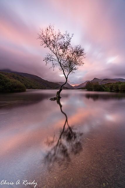 The Lone Tree - Sunrise