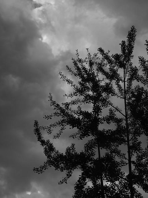 Por la tarde, la tormenta llegó...