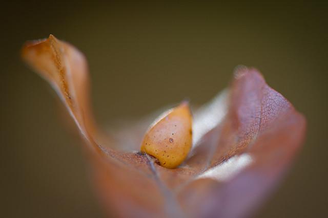Little mushroom on a leaf