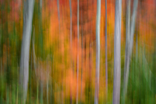 Abstract of autumn leaves in the High Peaks Area of the Adirondack Mountains near Lake Place, Upstate New York.