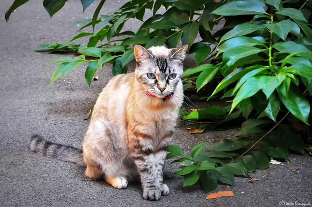 Petit chat près de l'église de Thuir