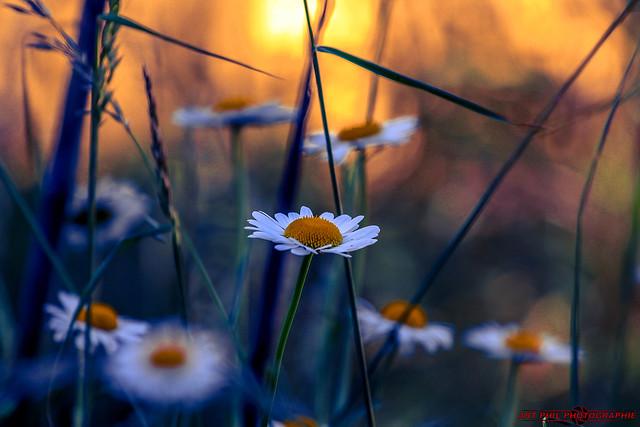 Fleurs Pétales de Couleurs et Soleil
