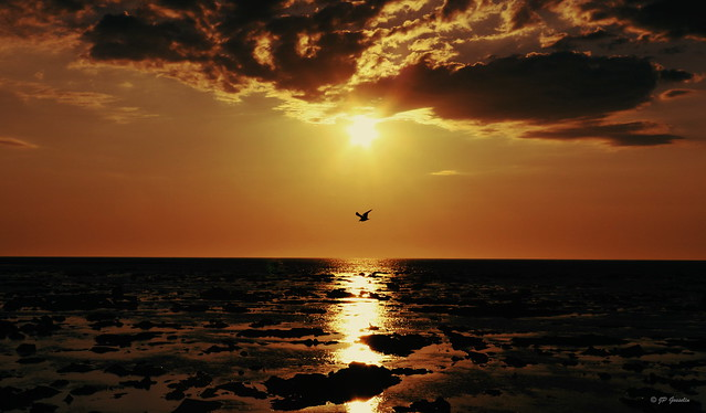 SUNSET OVER ST. LAWRENCE RIVER |  CAPUCINS  |  CAP-CHAT  |  GASPESIE  |  QUEBEC  |  CANADA