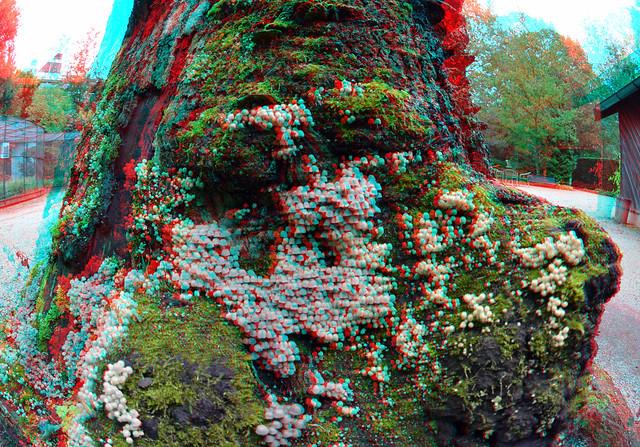 Tree  Trompenburg Rotterdam 3D Fish-eye