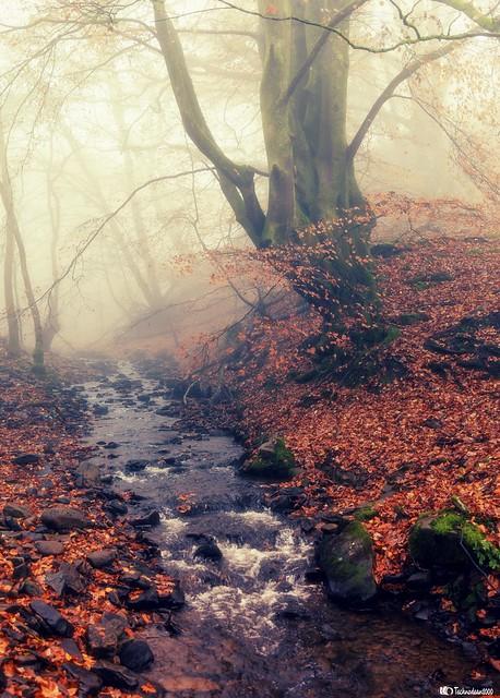 Golden leaf's on a misty stream