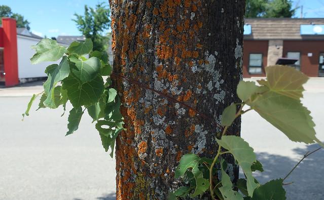 Un arbre qui ne cachait pas la forêt