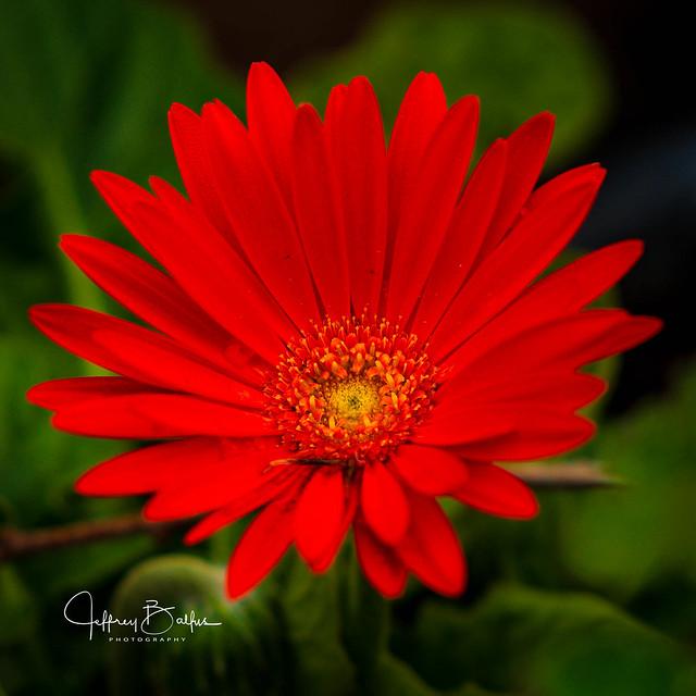 Bright Fall Flower