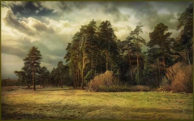 October forest.(iPhoneX)