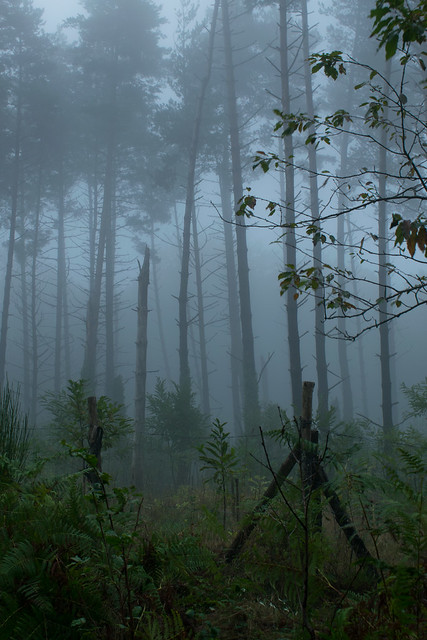 Boira al Bosc de Santa Fe