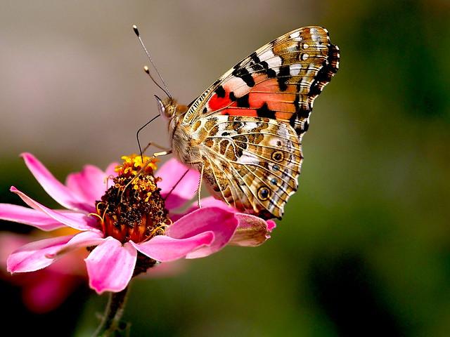 OMD EM1 10.24.2021 butterfly 1