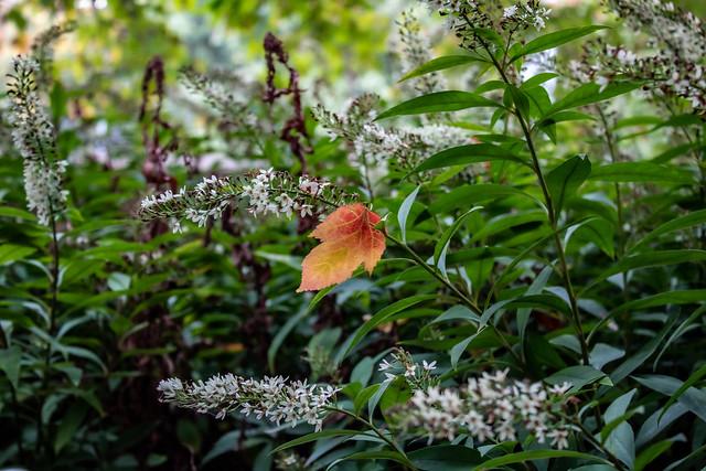 Autumn Leave stuck on Flowers
