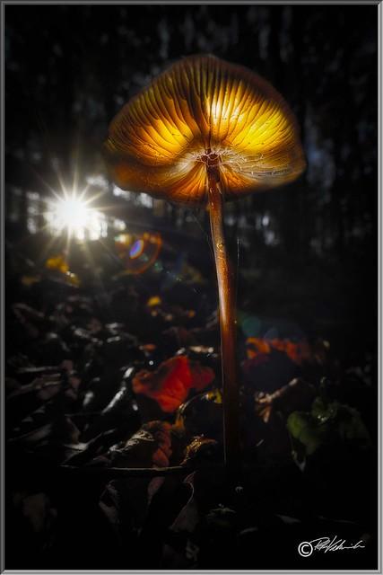 Mushroom Painting learning road map