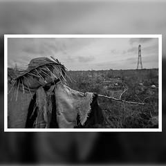 u25aaufe0fGuardian of the pumpkins, Wales UK #welshscarecrow #scarecrow #guardianofthepumpkins
