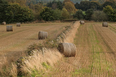 Farmer doesn't seem much fussed about these bales.