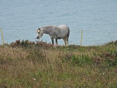 Downland Ponies, ShtrsBttm, Oct 18 2021, P1 (12)