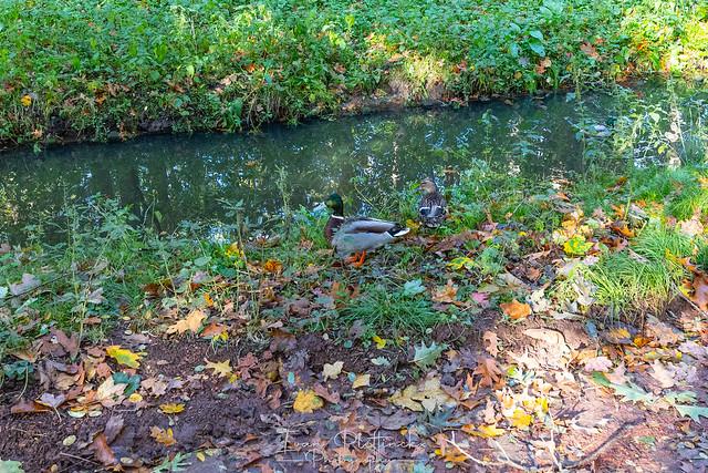 WandelingGemeenteparkBoom_231021_087