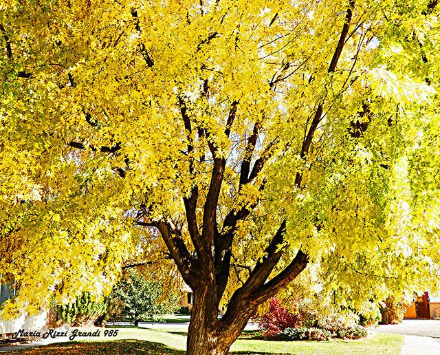 Autumn Again - N12