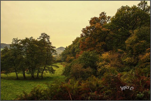 Tumbling Autumn Colors .